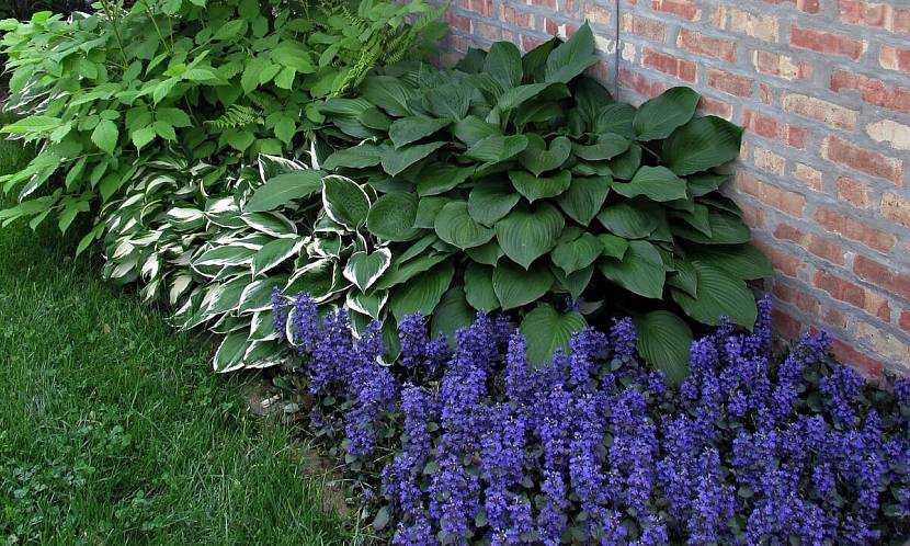 Садовые и декоративные растения, которые любят тень